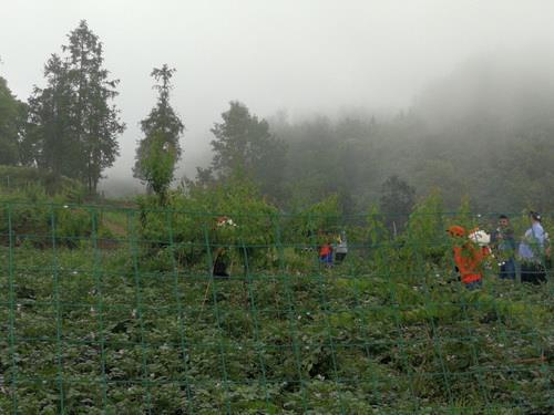 黔江:中塘乡开展马铃薯晚疫病统防统治工作