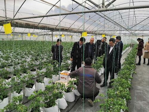 南川区腾春蔬菜专业合作社生产基地调研